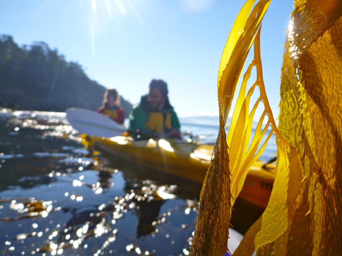 Roaring 40s Kayaking blog - Tips for kayaking photography