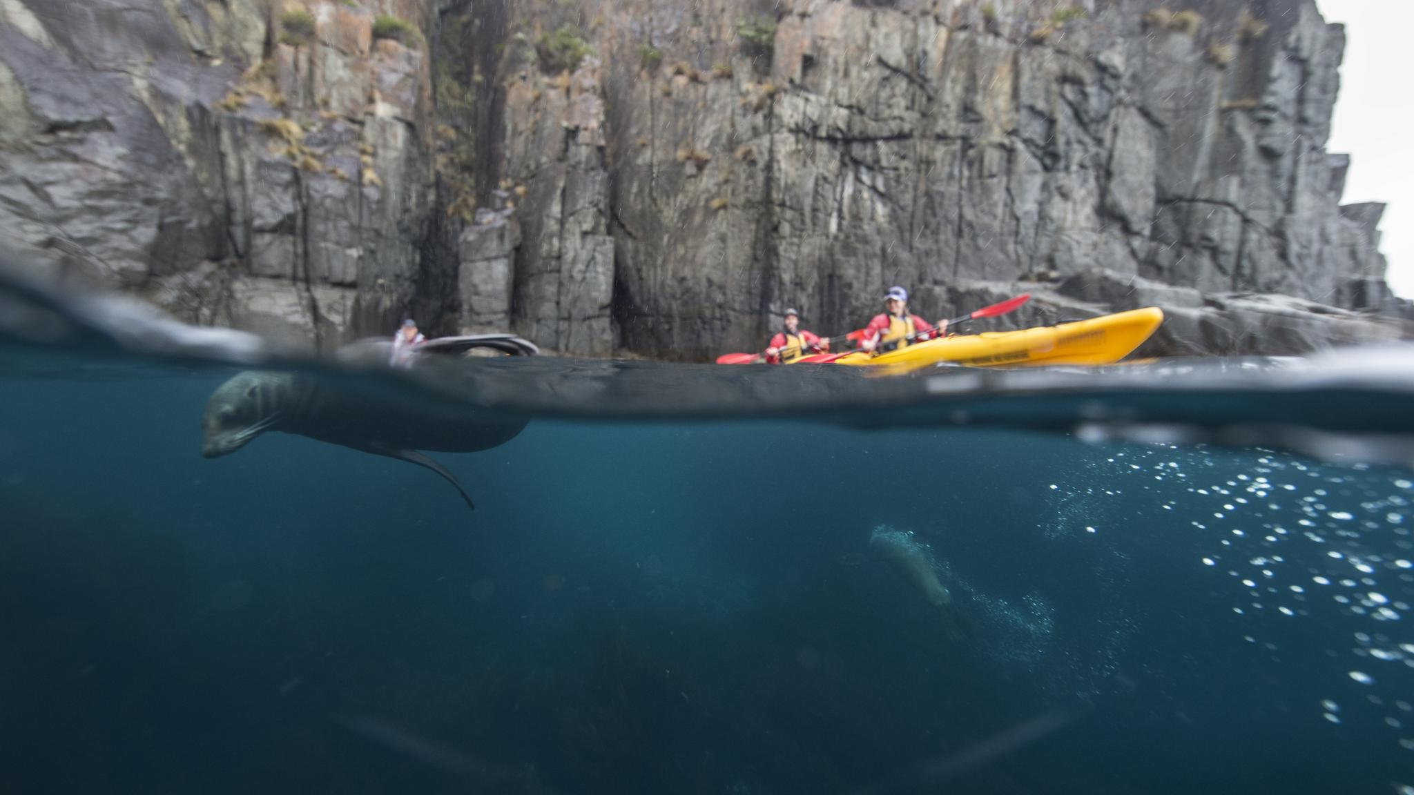 Roaring 40s Kayaking - Tasman Peninsula adventure tour - Best kayaking in Tasmania